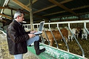 Livestock_management_blog.jpg