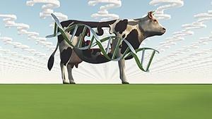 breeding_cow_blog.jpg